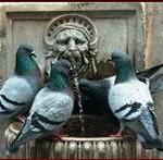 piccioni fontana