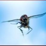 insetto alato