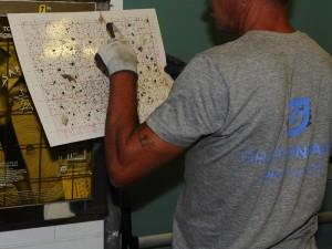 monitoraggio insetti volanti